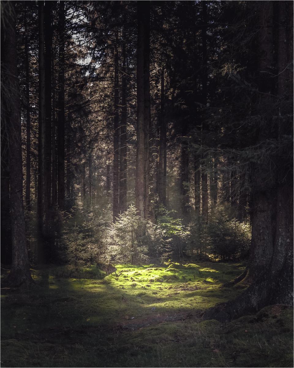01_Bellever Forest Dartmoor_John Barton