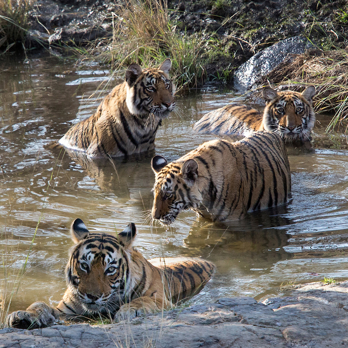 First 'Ranthambore Watering Hole' by Tony Oliver