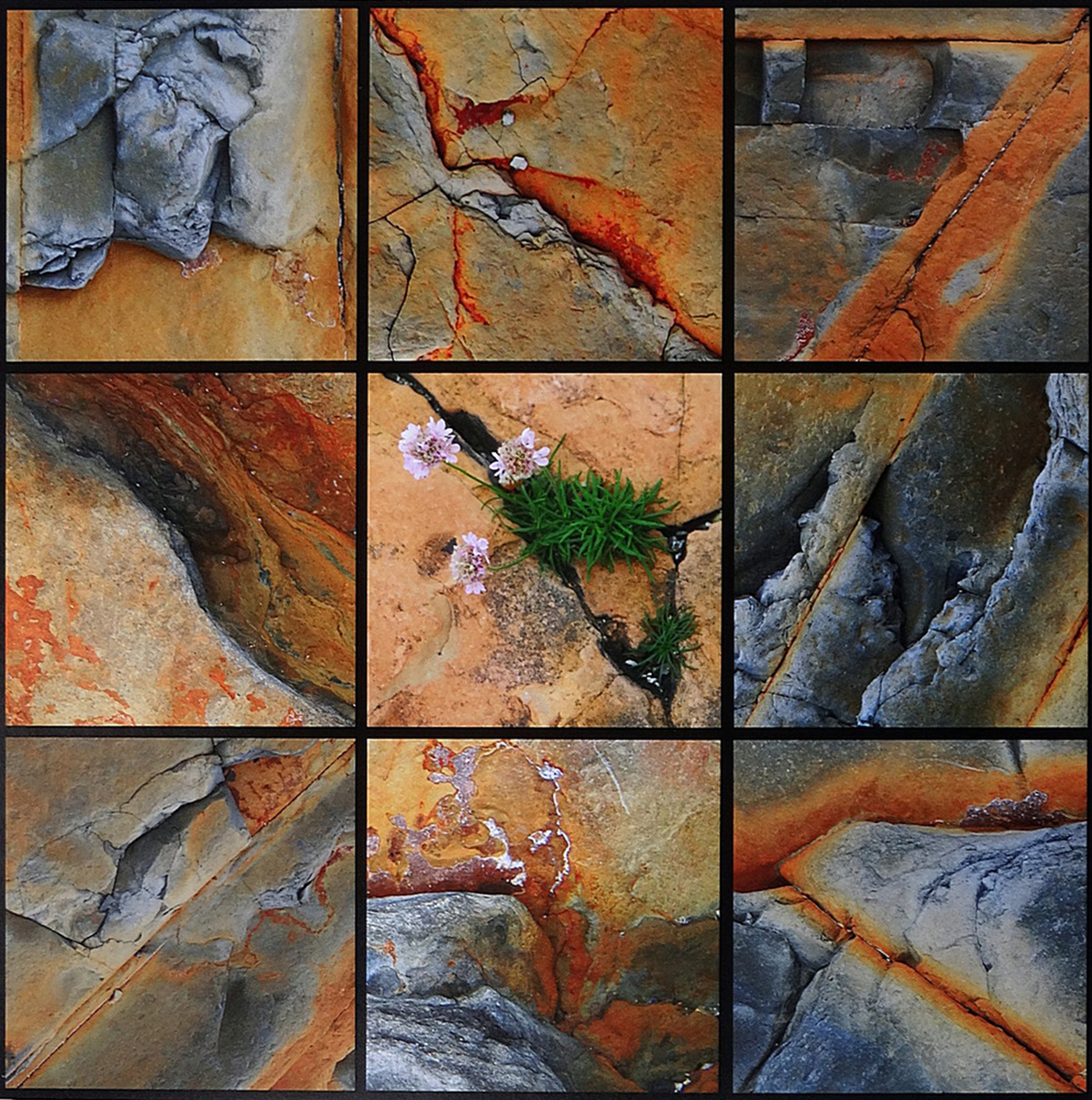 'Rock Mosaic' by Sheila Read