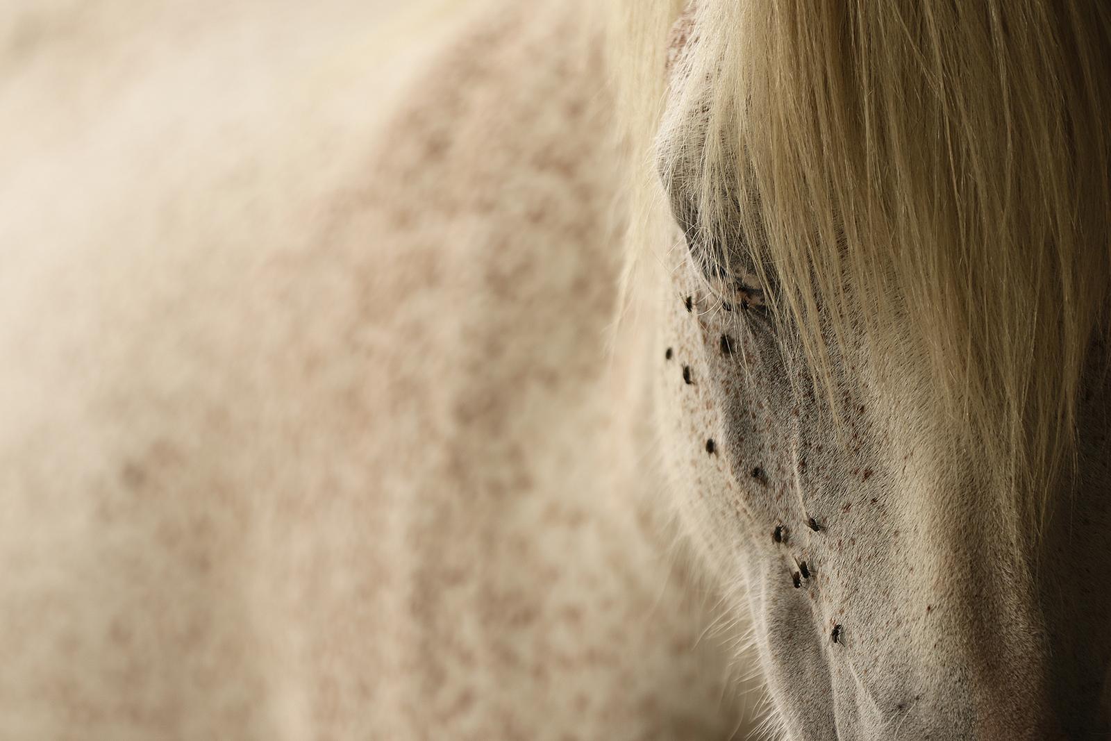 Third 'Horse 01' by Tony O'Reilly'