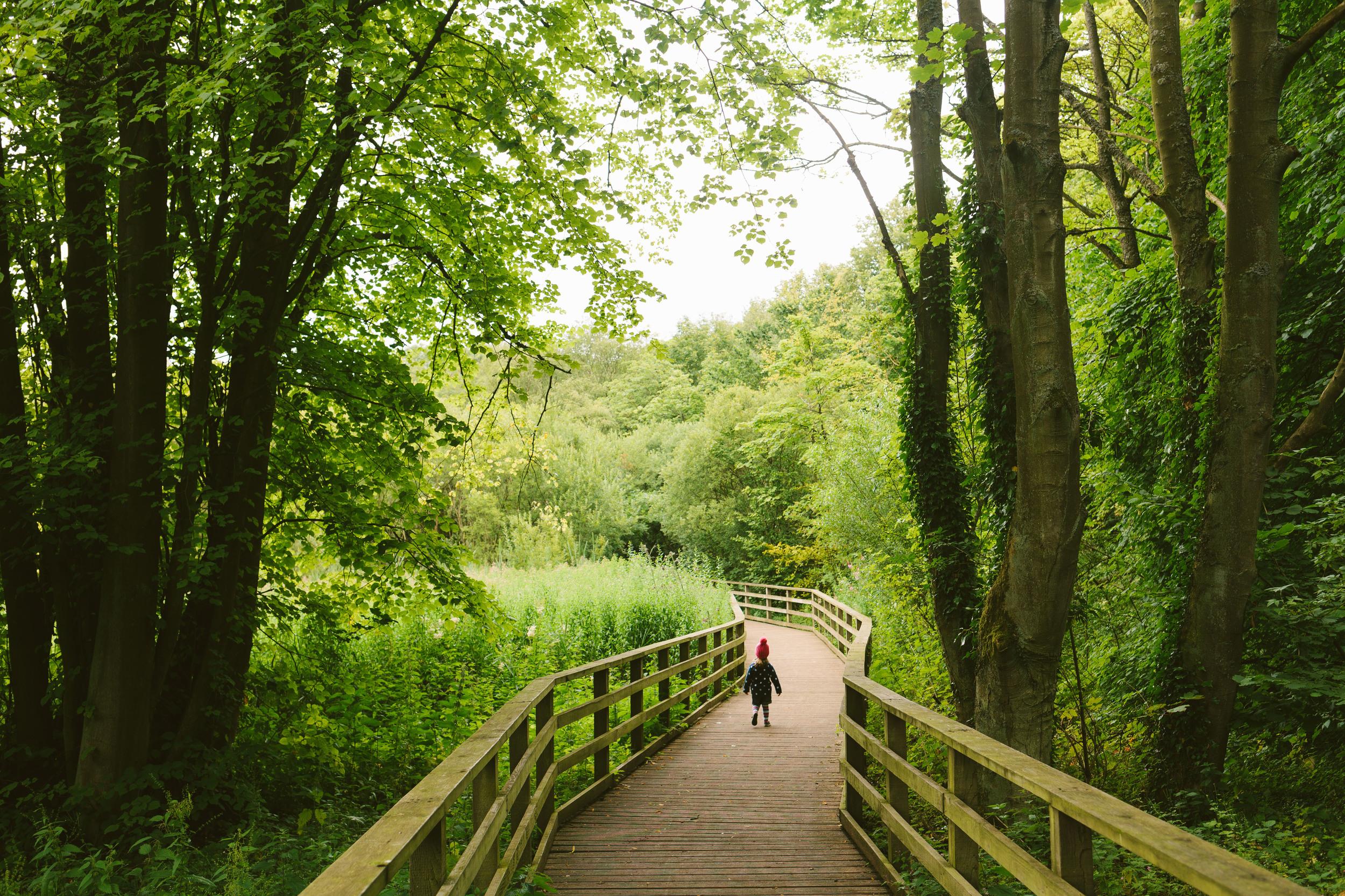 Audrey Hardwick Park-0015.jpg