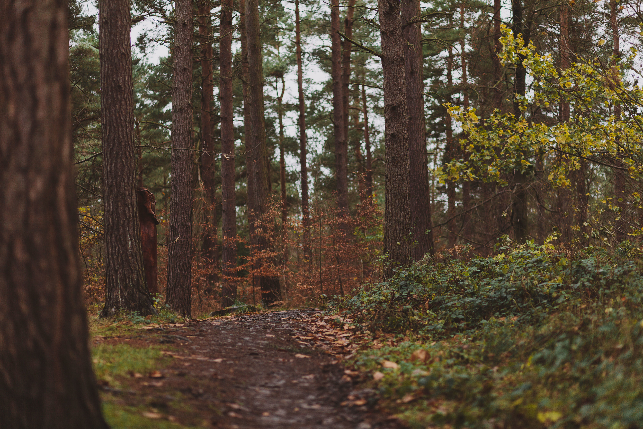 Barry Forshaw // Engagement shoot scouting at Chopwell Woods // An autumn path covered in leaves