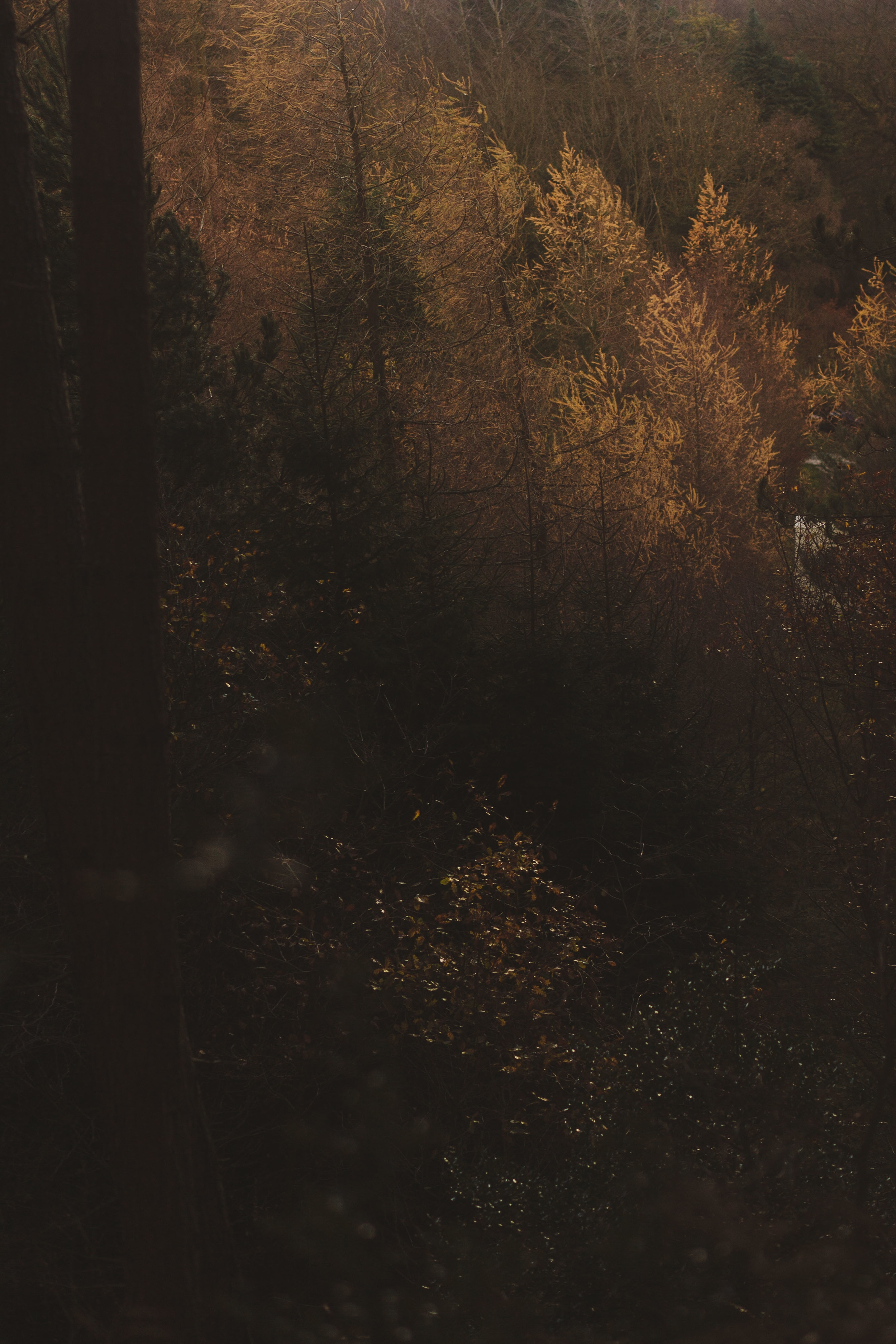 Barry Forshaw // Engagement shoot scouting at Chopwell Woods // Autumn trees caught in sunlight