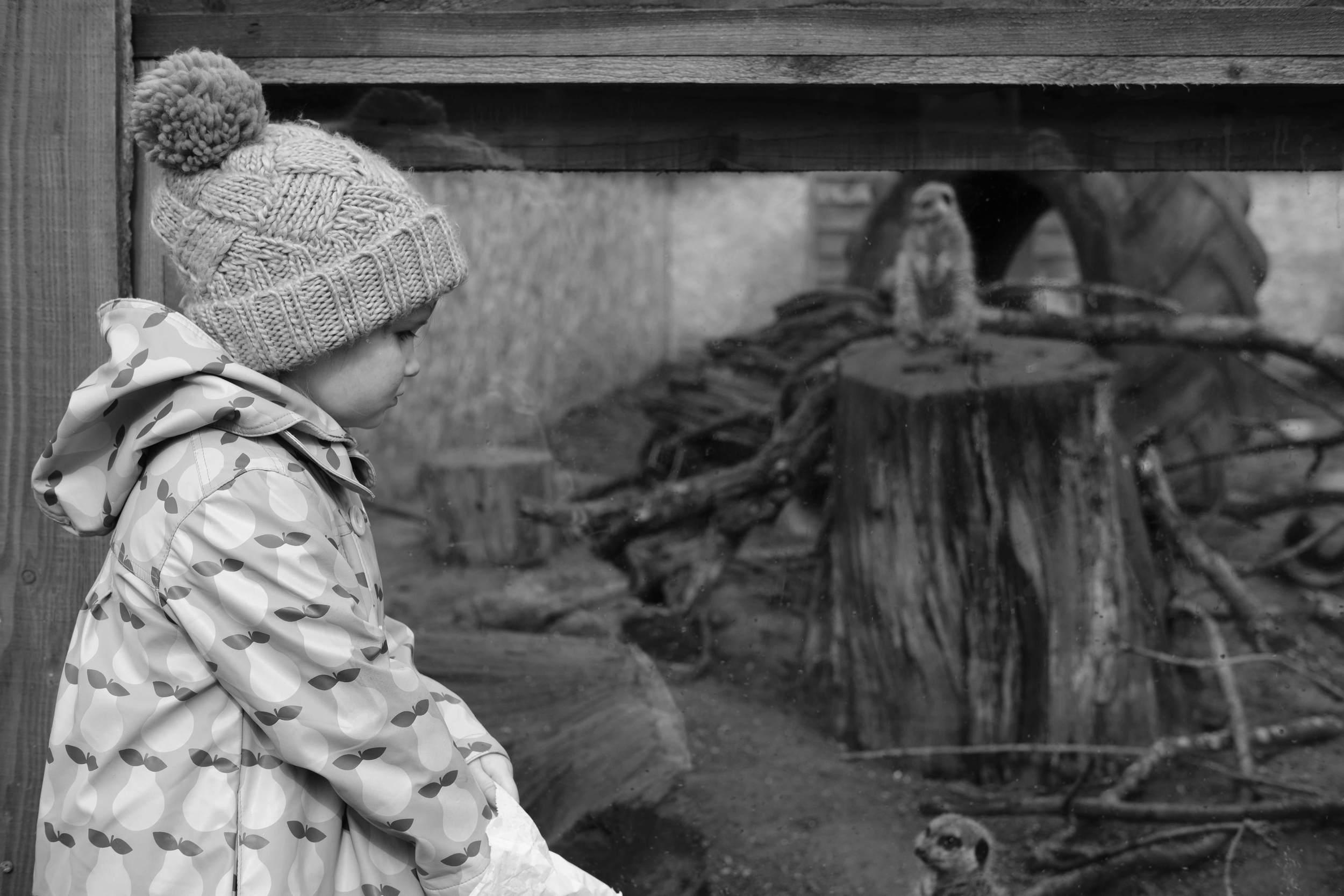 Audrey outside Meerkat enclosure at Eshottheugh Animal Park, Northumberland