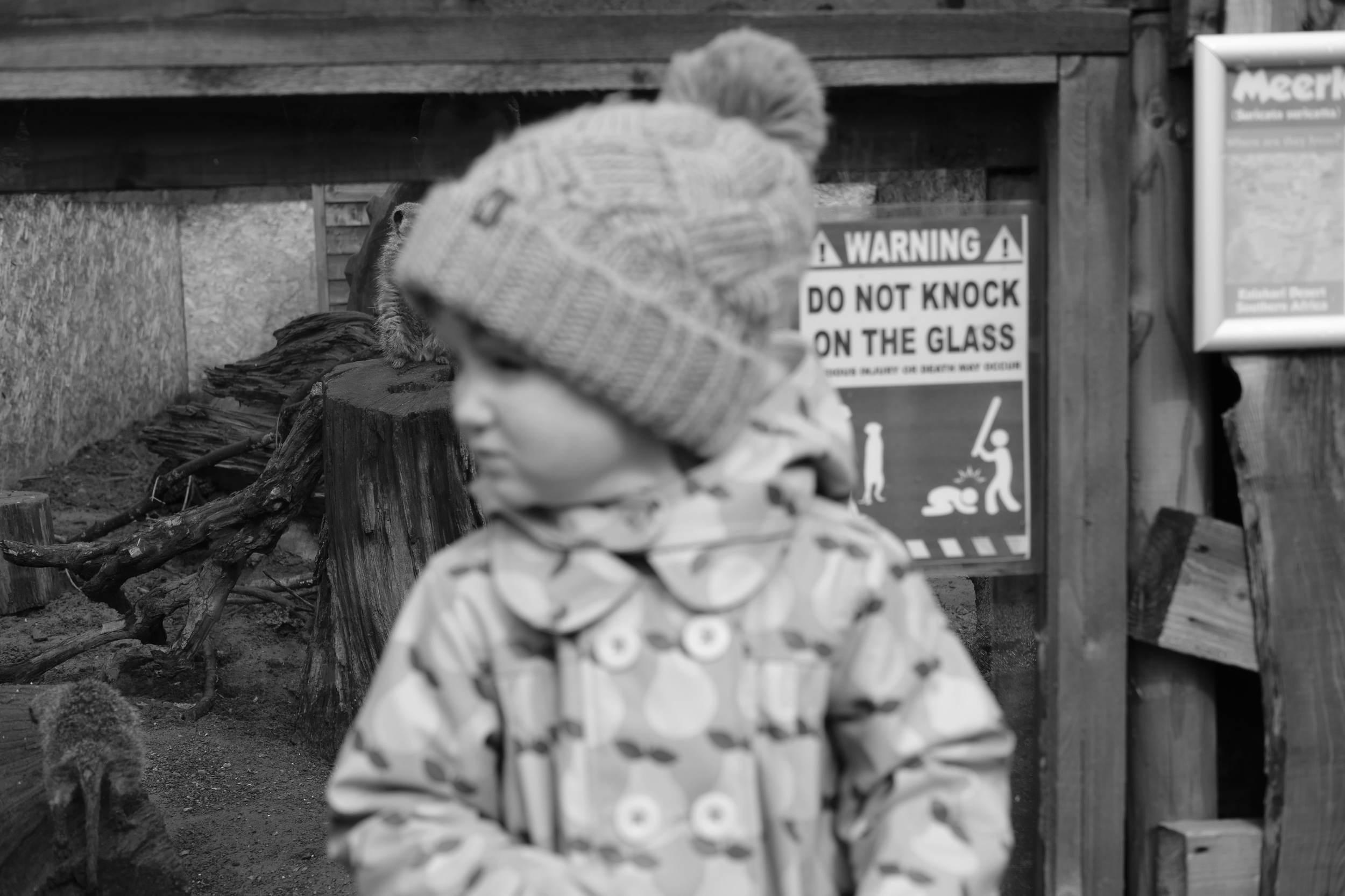 Audrey at Meerkat enclosure at Eshottheugh Animal Park, Northumberland