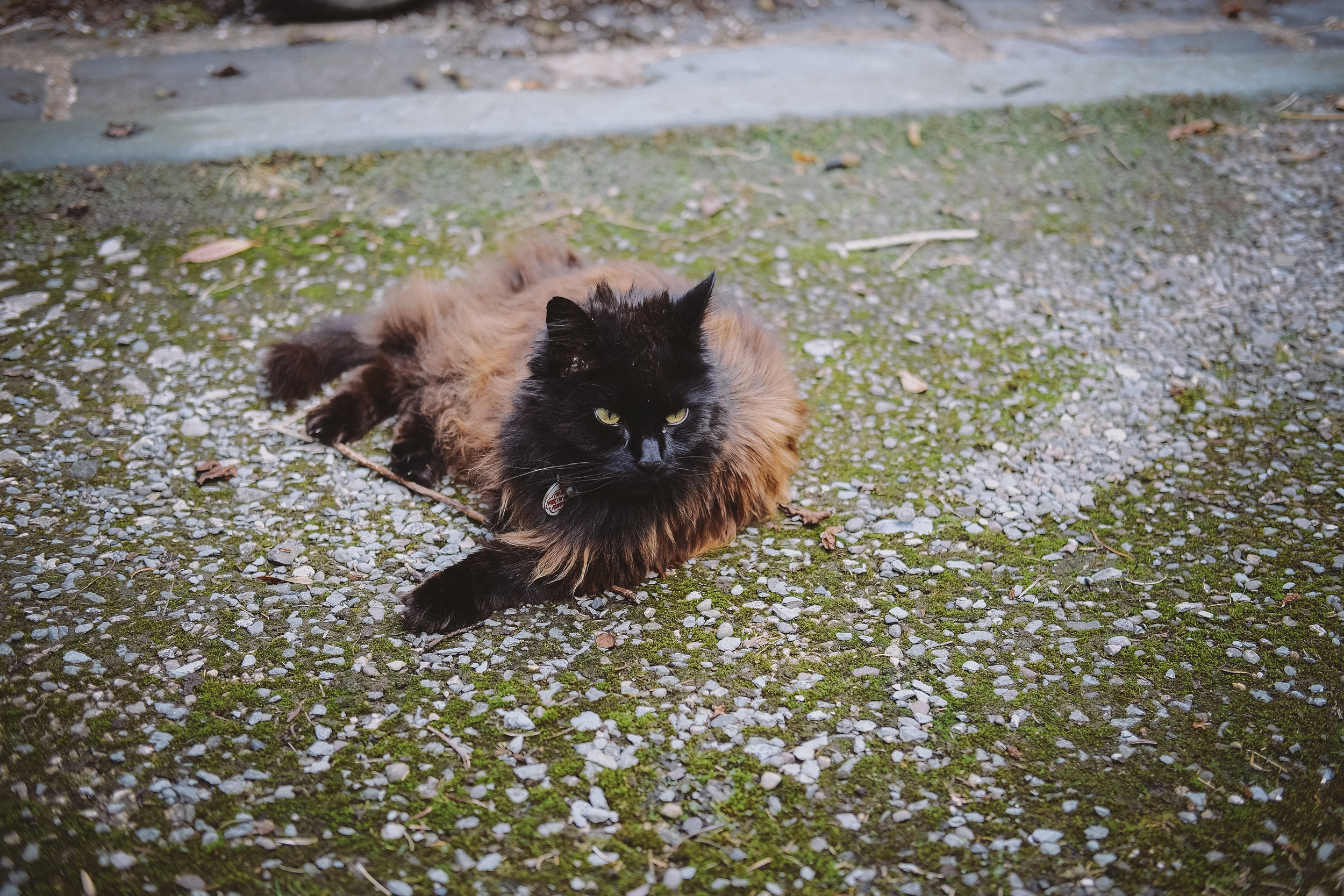 The resident cat lounges in the sun at Julia and Darren's Lake District wedding by Barry Forshaw
