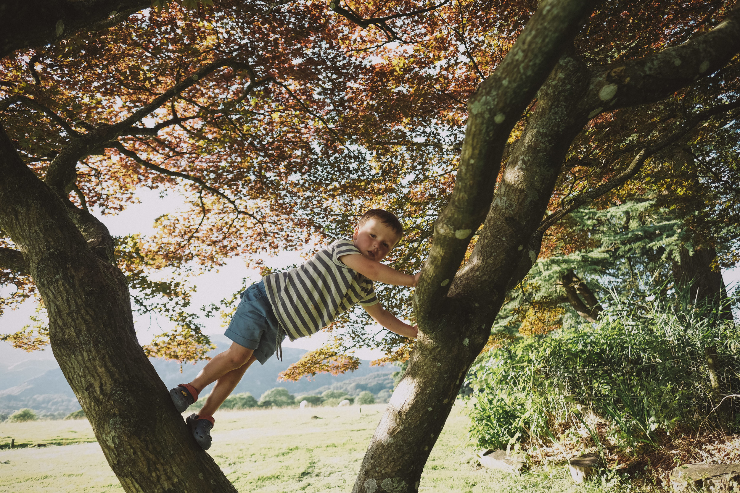A boy climbs a tree drenched in sunlight at Julia and Darren's Lake District wedding by Barry Forshaw