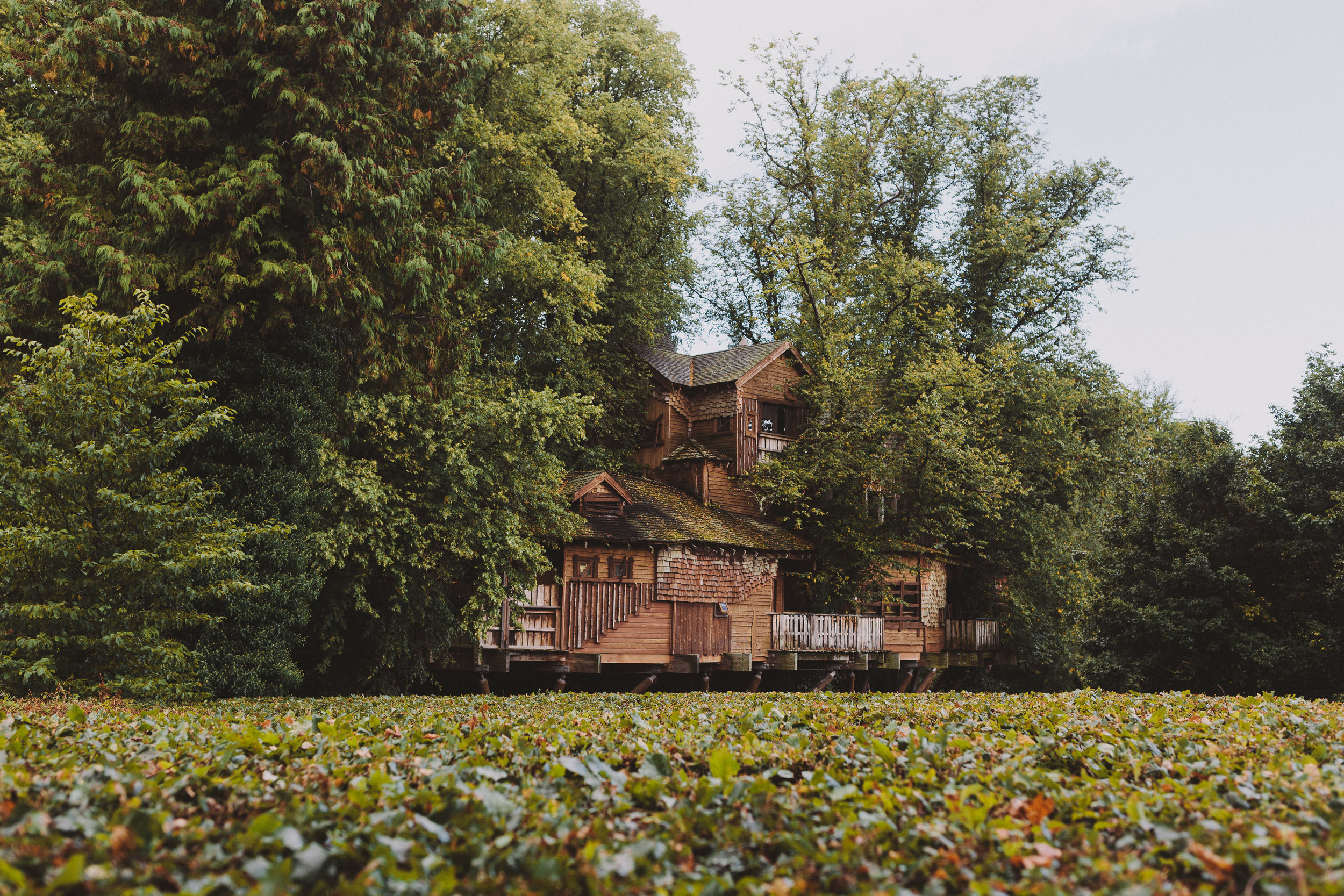 Alnwick Treehouse wedding venue by Barry Forshaw