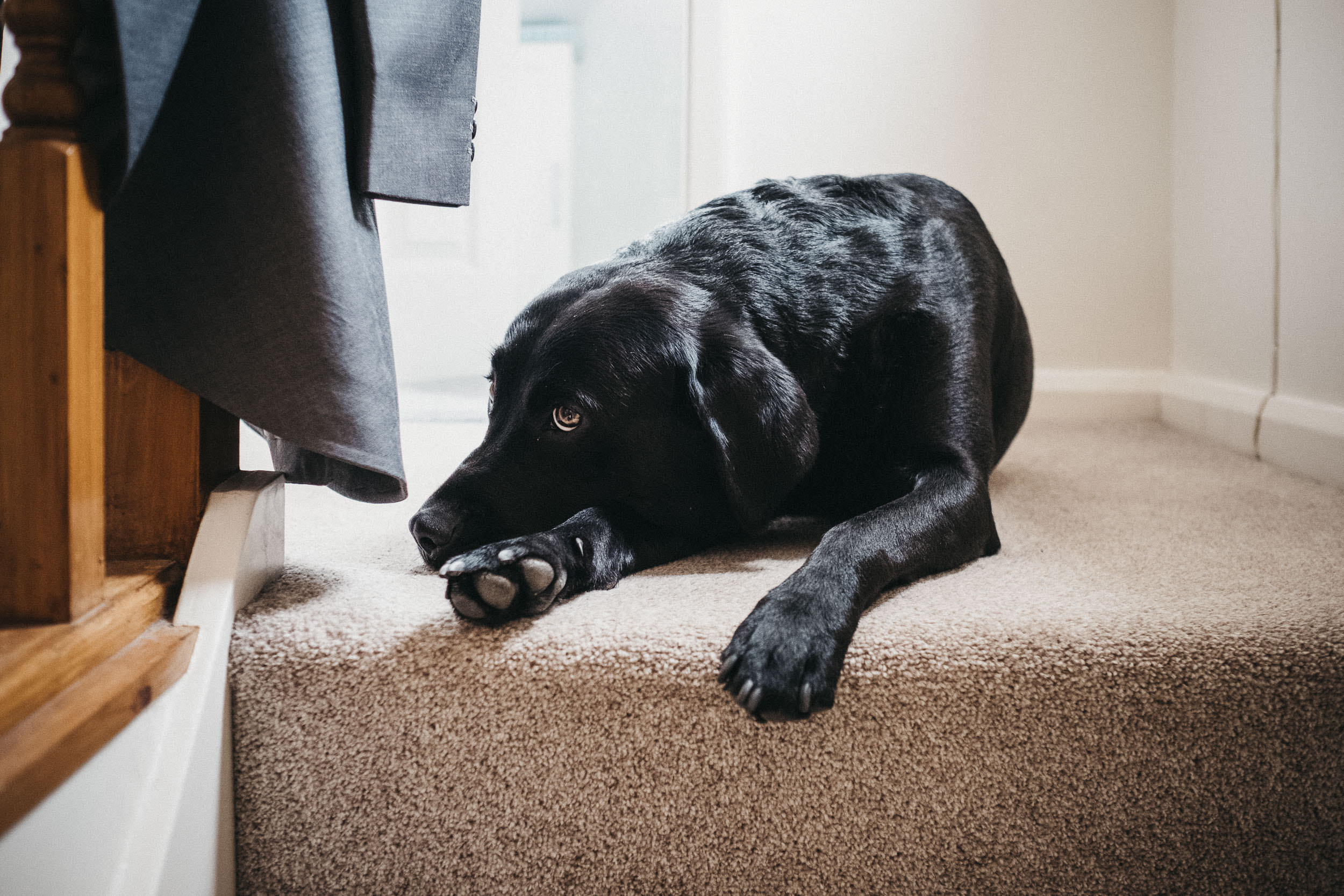 Groom's dog sitting at top of stairs