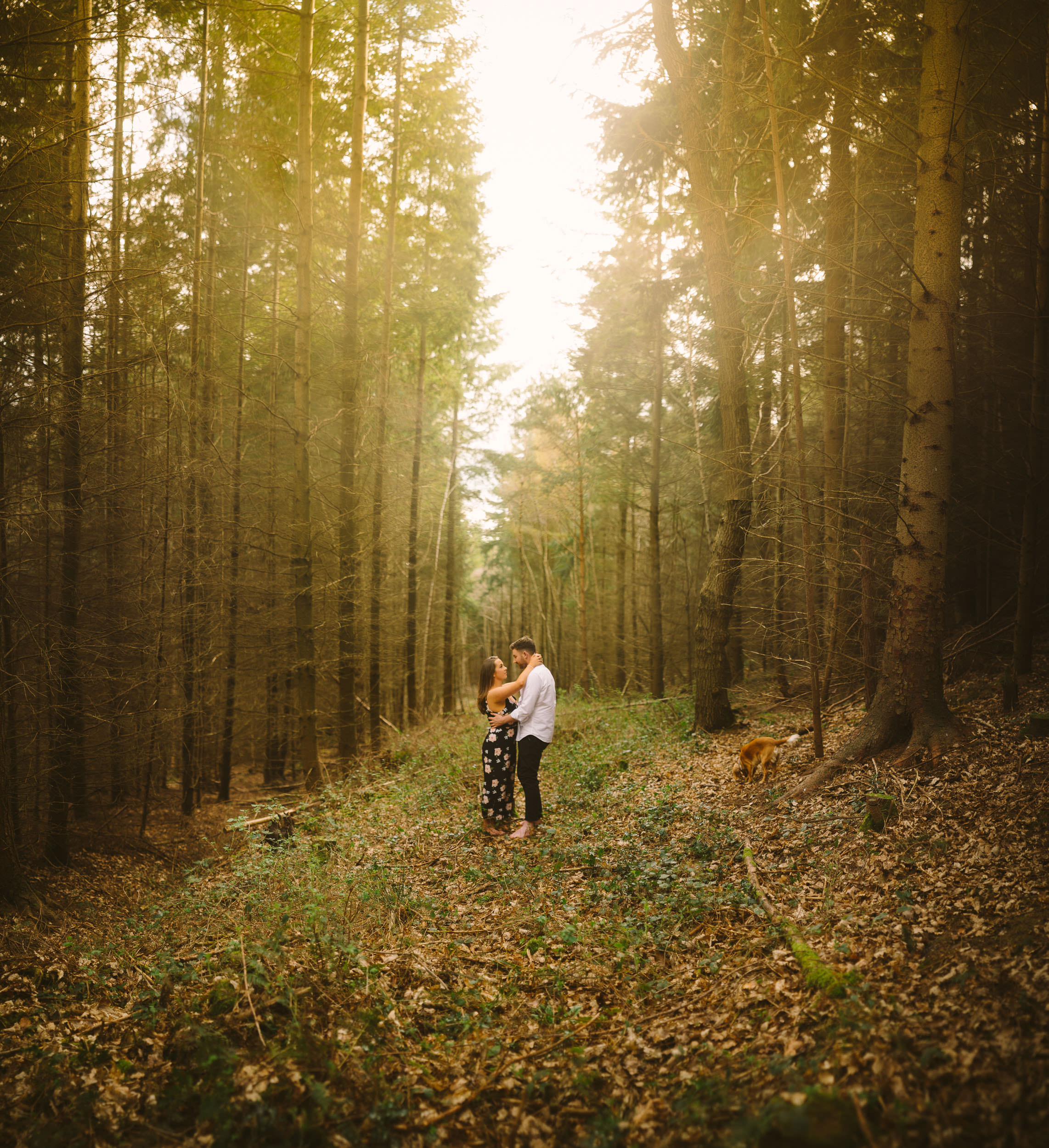 Engaged couple embrace in an avenue of trees deep in the forest