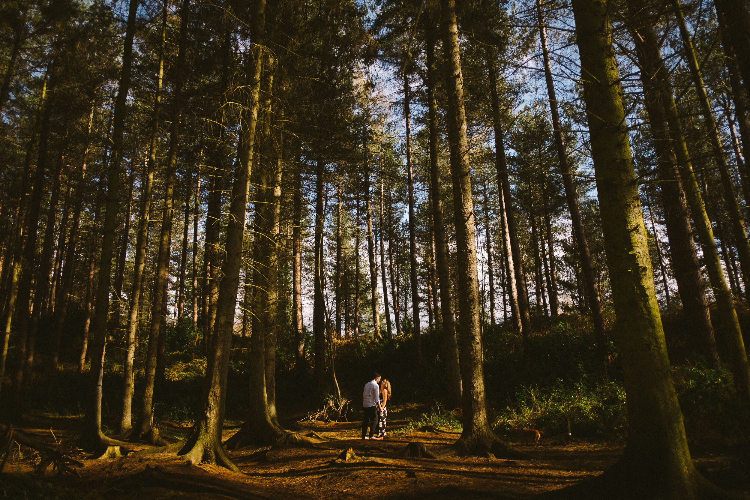A wide shot of a couple holding hands with tall trees all around