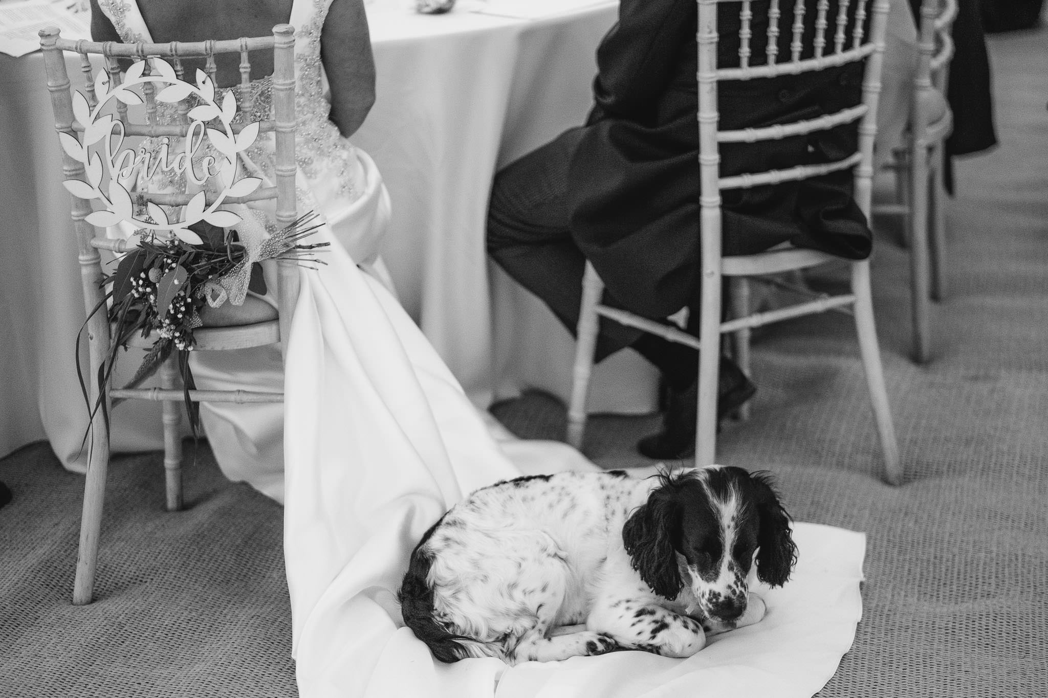A black and white photo of the bride's dog sitting on her wedding dress