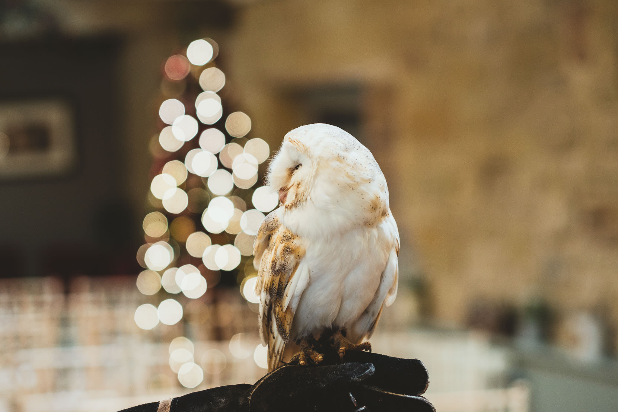 Close up of owl with fairy lights in background