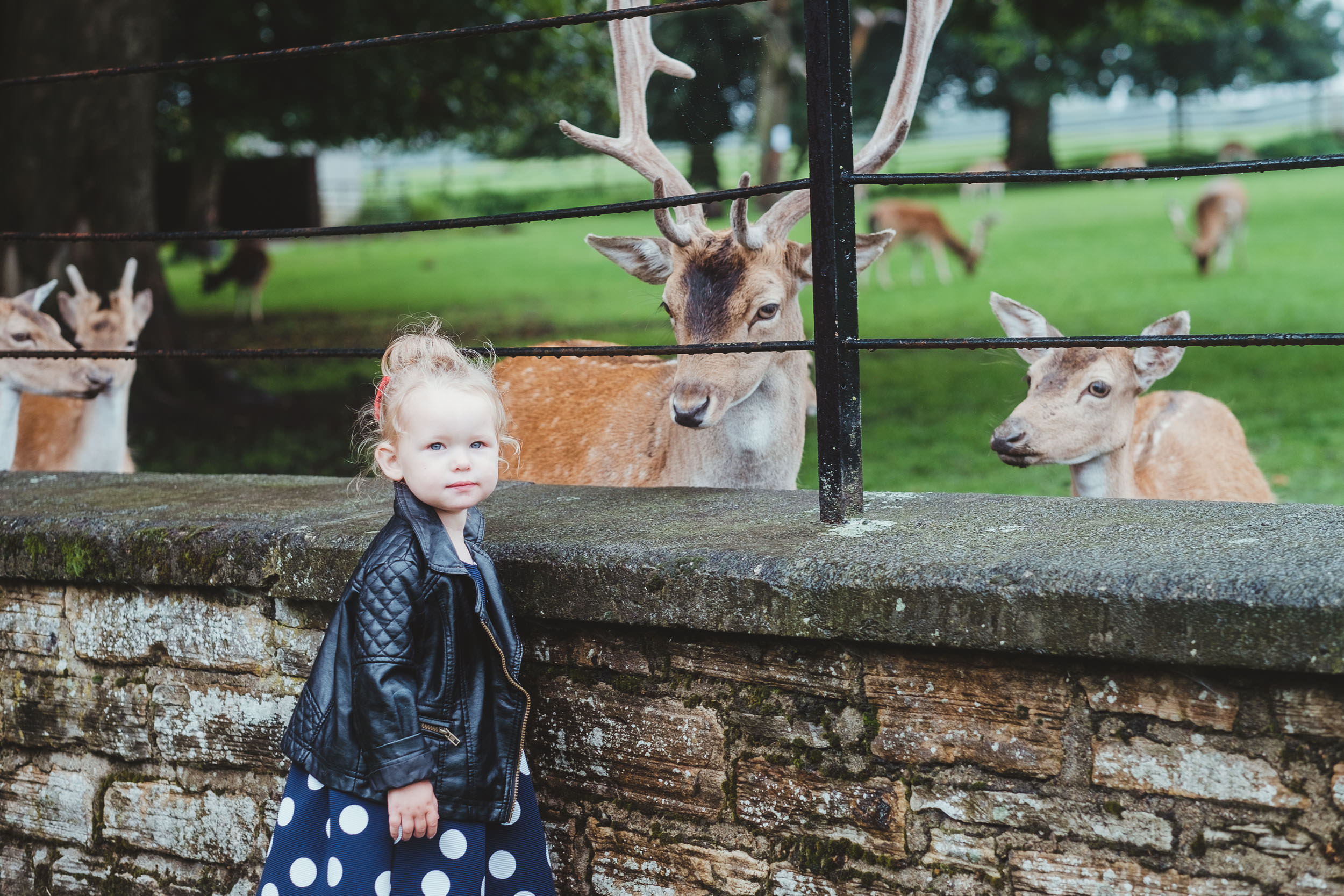 Whitworth Hall child wedding guest with the deer
