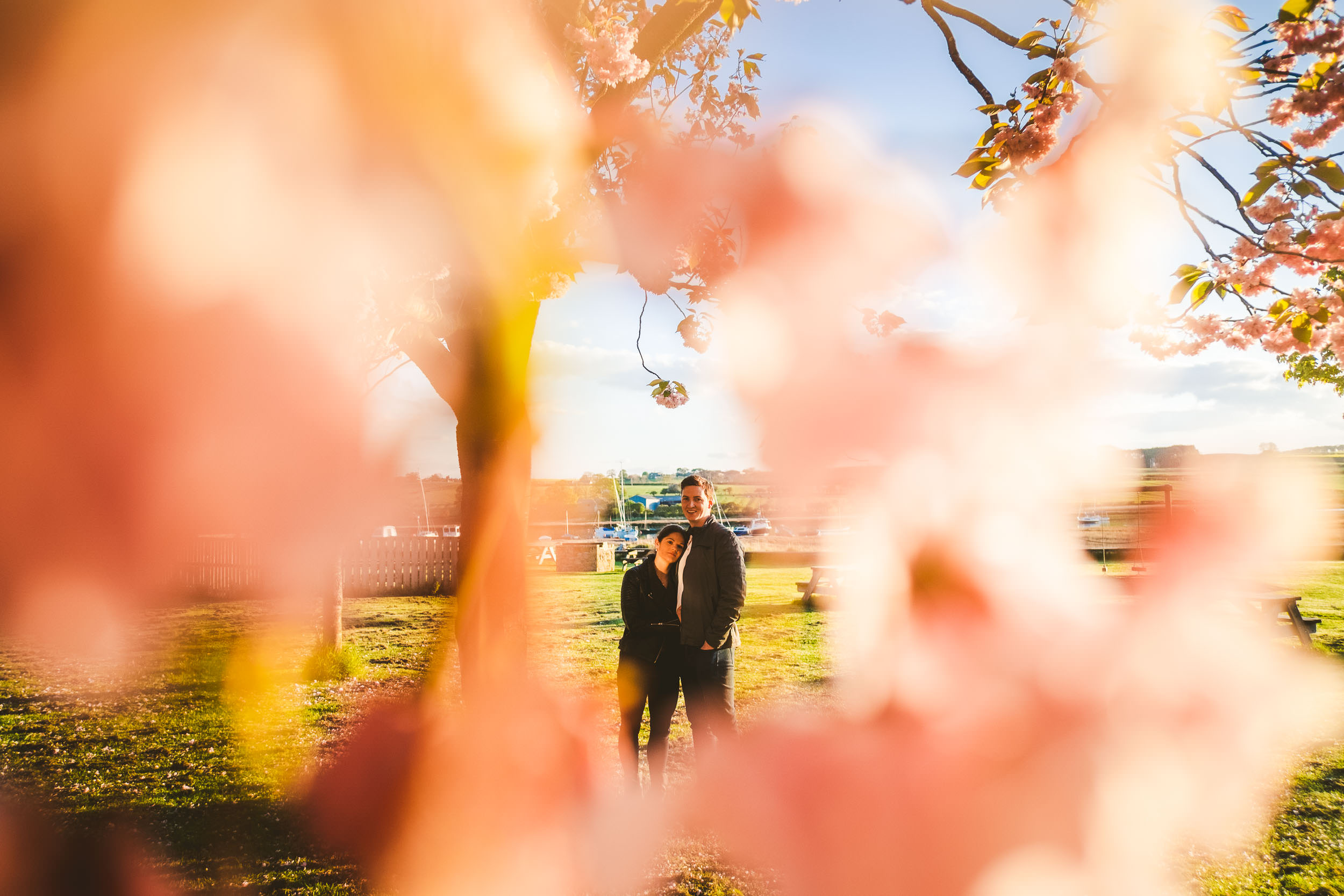 Couple cuddle framed by cherry blossoms in Northumberland
