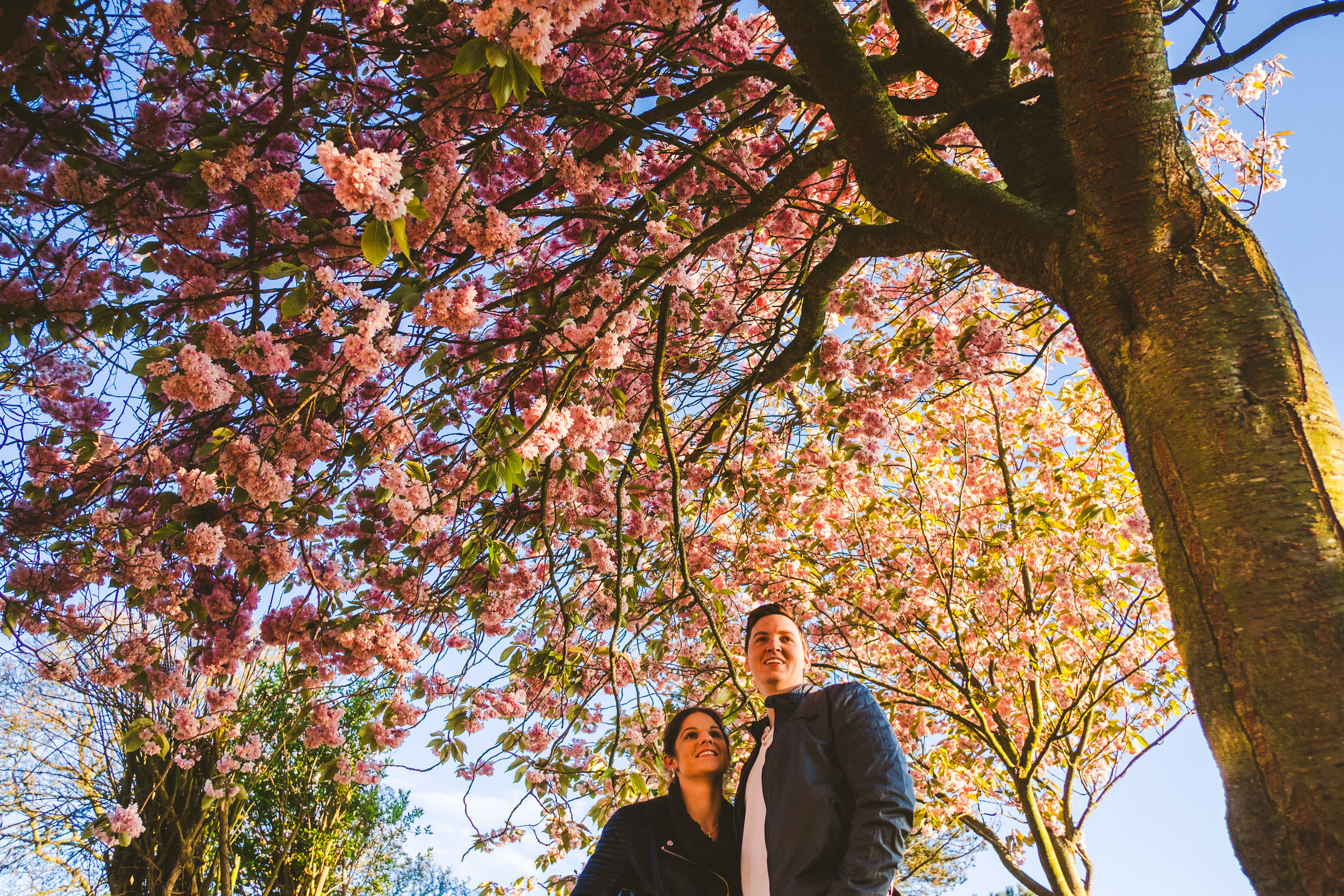 Couple cuddle while canopy of cherry blossoms is above their heads