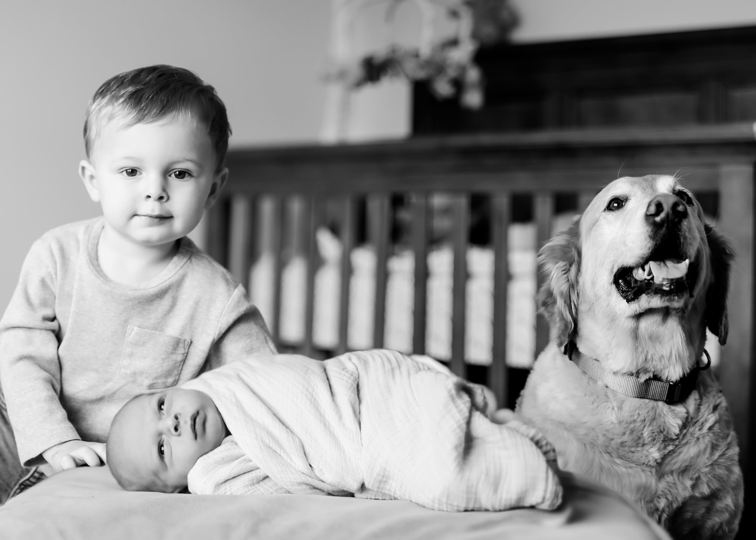 newborn with brother and dog.jpg