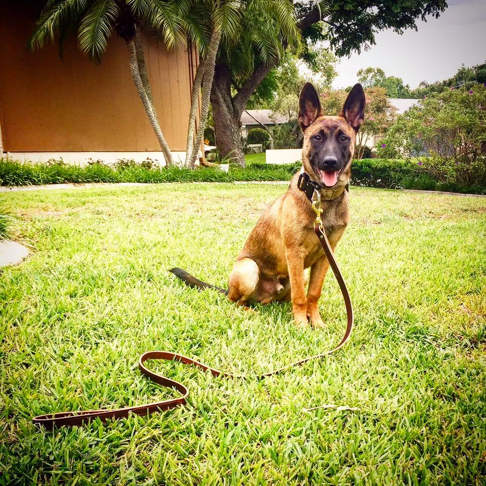 Our Promise - The Refined K9, LLC is rated one of the Top Five Dog Trainers in Florida 2016. We aim to  encourage learning and development and not to change the personality of your beloved pup.
