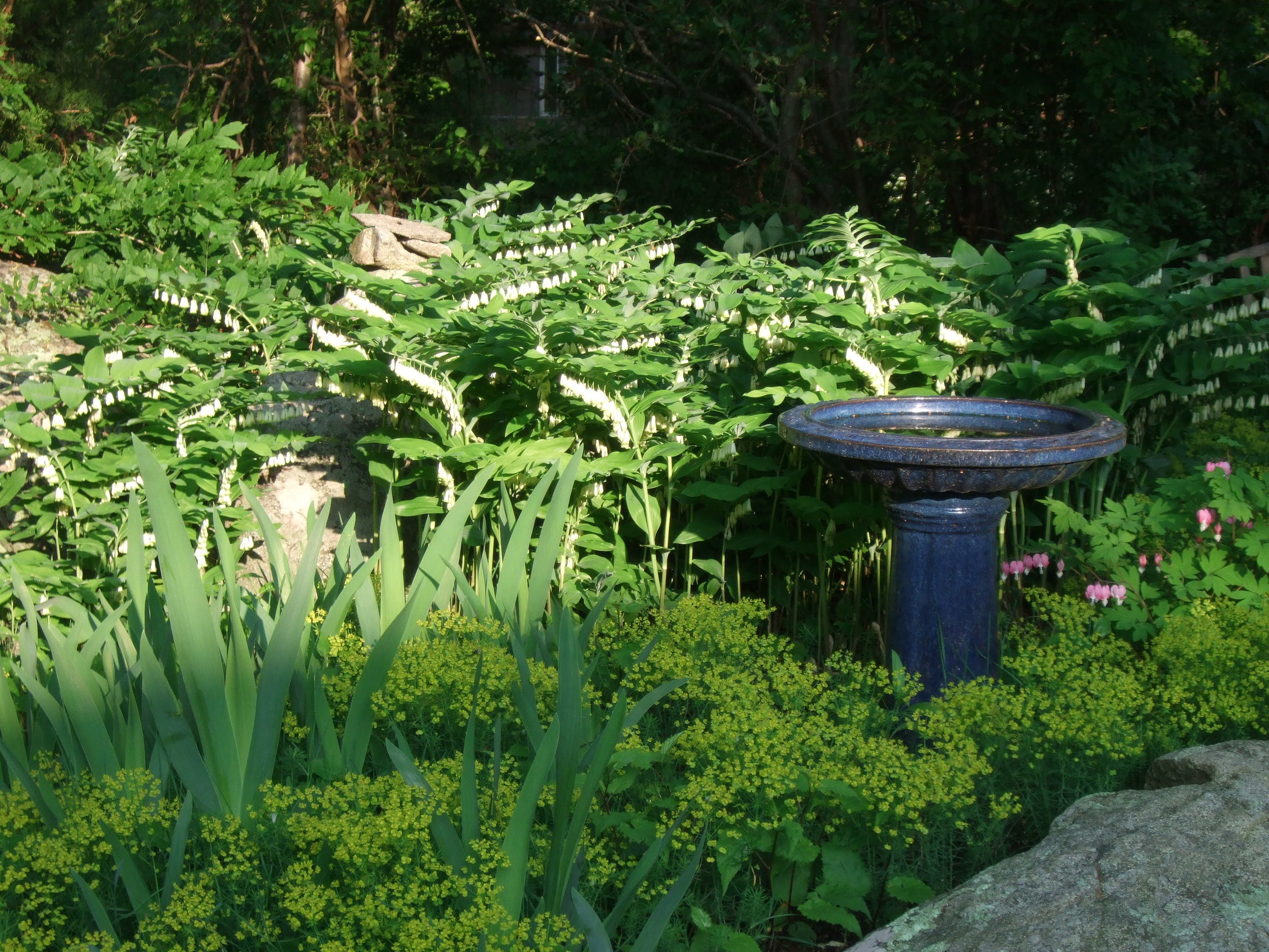 Bird bath. Scituate, MA