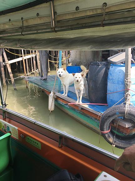 Good boys no.3 and no.4, Tai O Fishing Village, China (©Deborah Clague, 2018).
