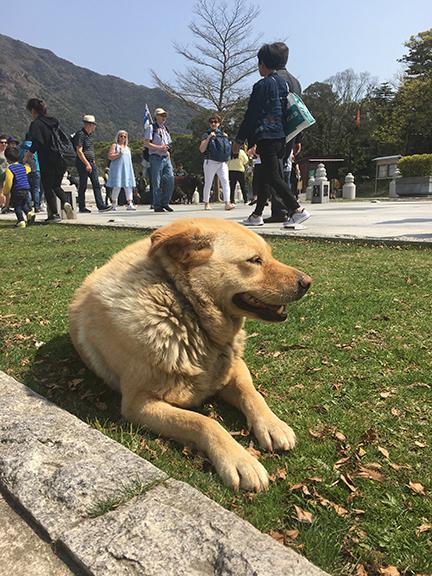 Good boy no.6, Po Lin Monastery, China (©Deborah Clague, 2018).