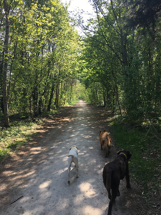 Being a professional dog walker at Bois des Vincennes, Paris (©Deborah Clague, 2019).