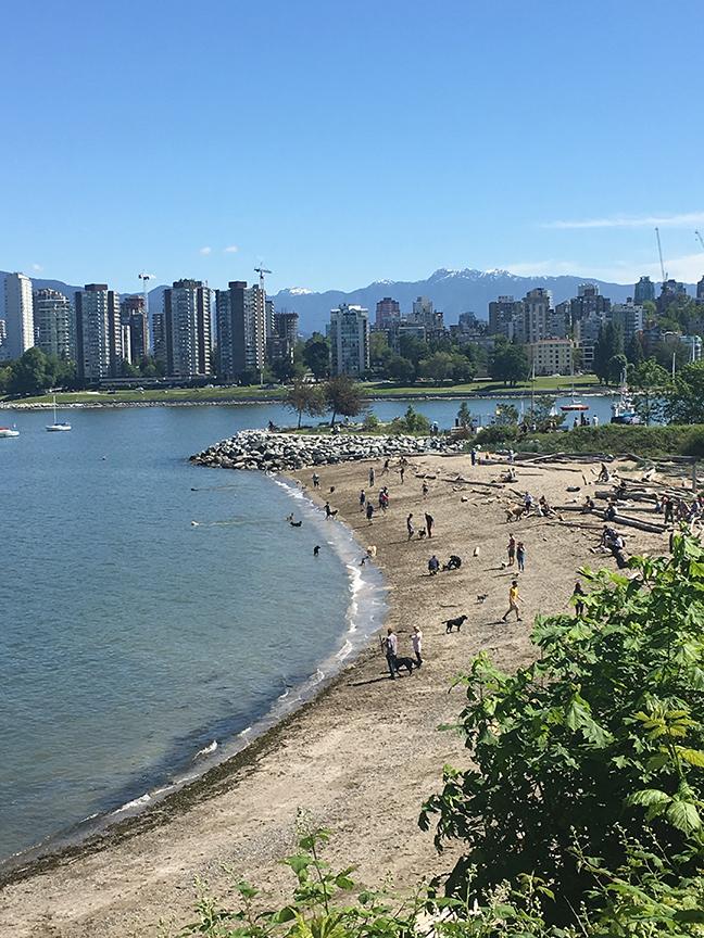 The DOG BEACH, Vancouver (©Deborah Clague, 2019).