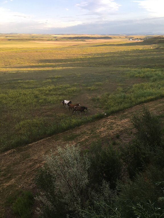 Our equine neighbours in Great Falls, Montana (©Deborah Clague, 2019).