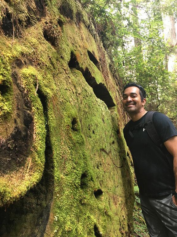 Hiking through the Redwood Forest, California (©Deborah Clague, 2019).