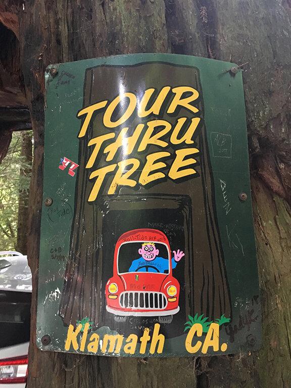 The famous tour-thru tree in Klamath, California (©Deborah Clague, 2019).