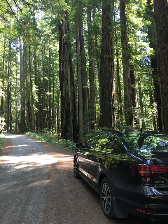 A very narrow, winding road through the, Redwood Forest, California. Only one car could pass at a time. There were regular pull-outs (©Deborah Clague, 2019).