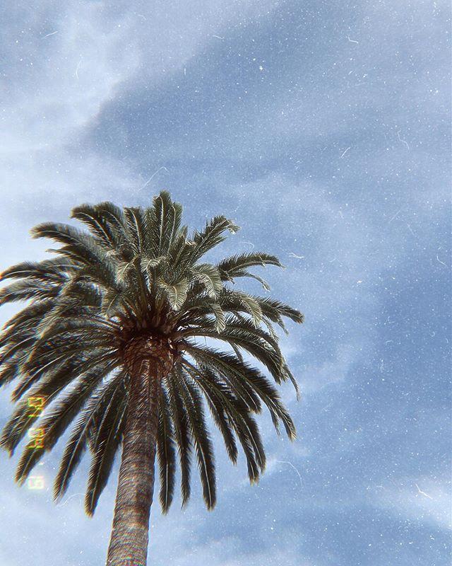 California Dreamin' 🌴 #tbt