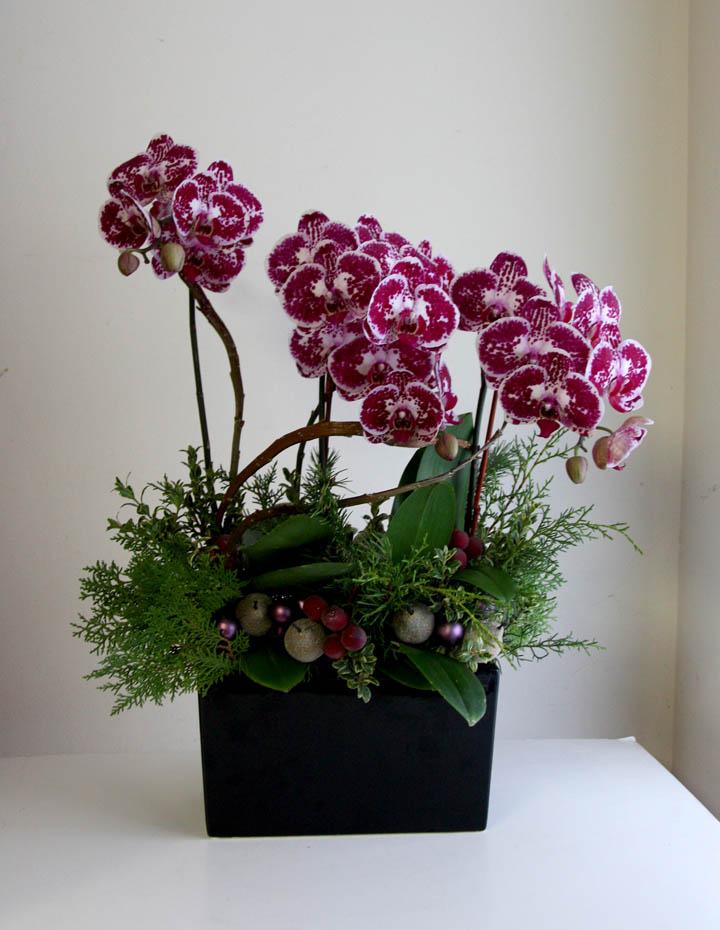 orchid planting.jpg