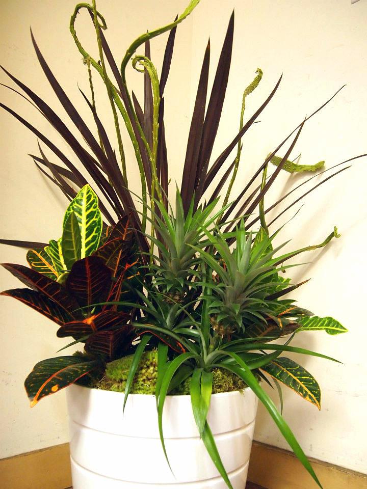 Plantscaping_1_final.jpg