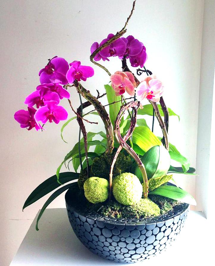 plantscaping_orchidsfinal.jpg
