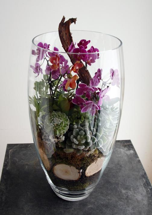 orchid terrerium.jpg