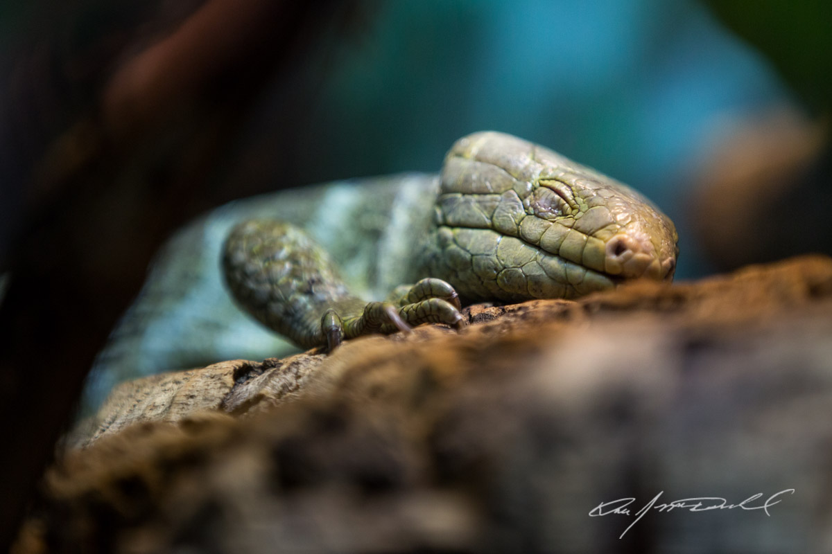 CSZ-Animal-Attractions-5D3A_9733-Edit.jpg