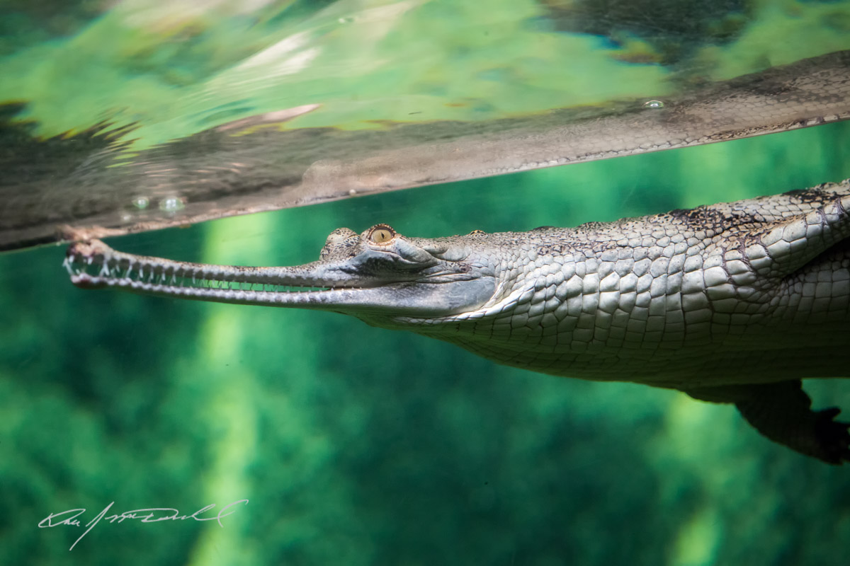 CSZ-Animal-Attractions-5D3A_9745-Edit.jpg
