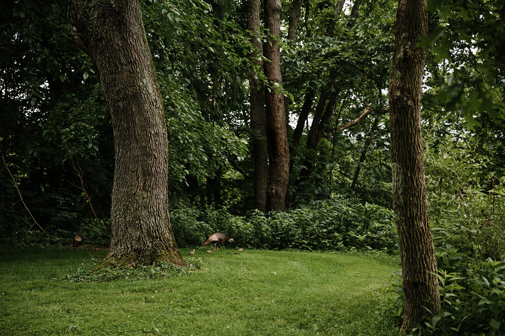 tree in the woods at wedding at hines hill conference center