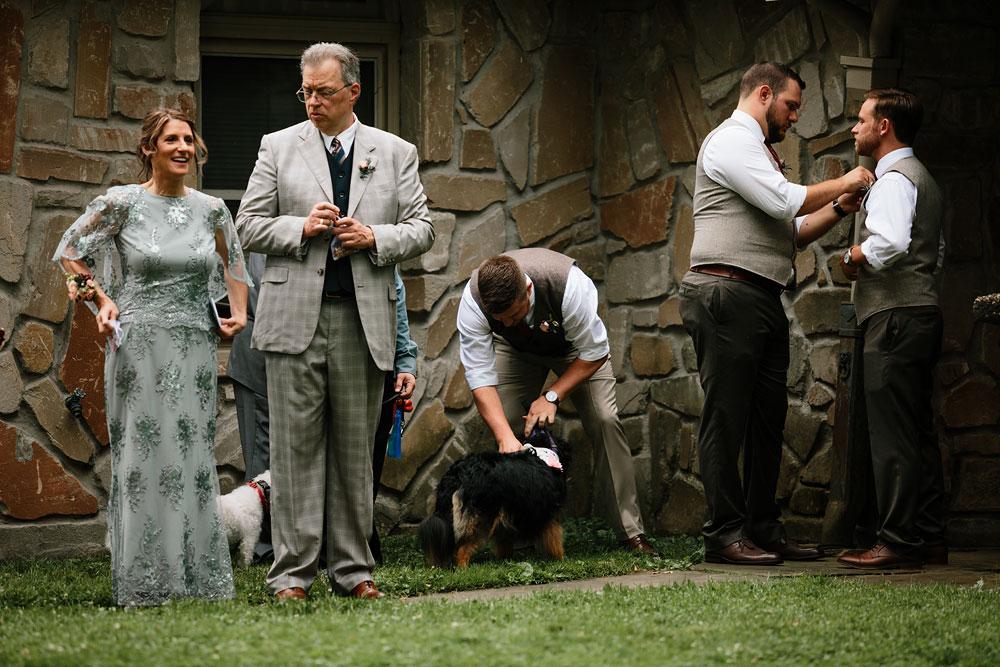 groom pets dog