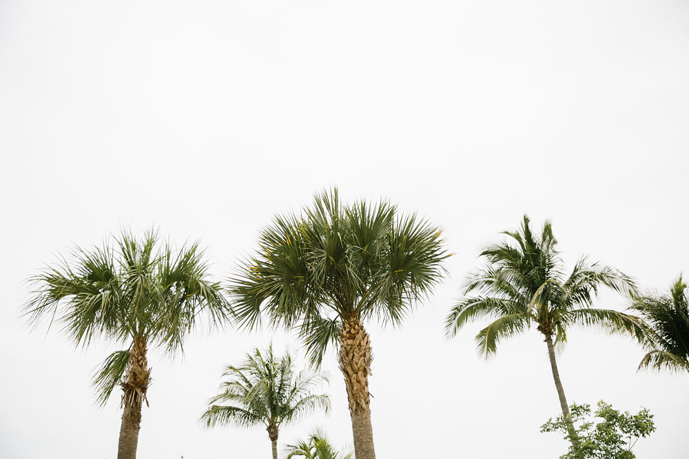 palm trees at Destination Wedding at Pink Shell Resort in Fort Myers Beach, Florida