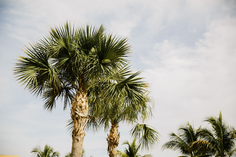 palm trees at destination wedding  at Pink Shell Resort in Fort Myers Beach, FL