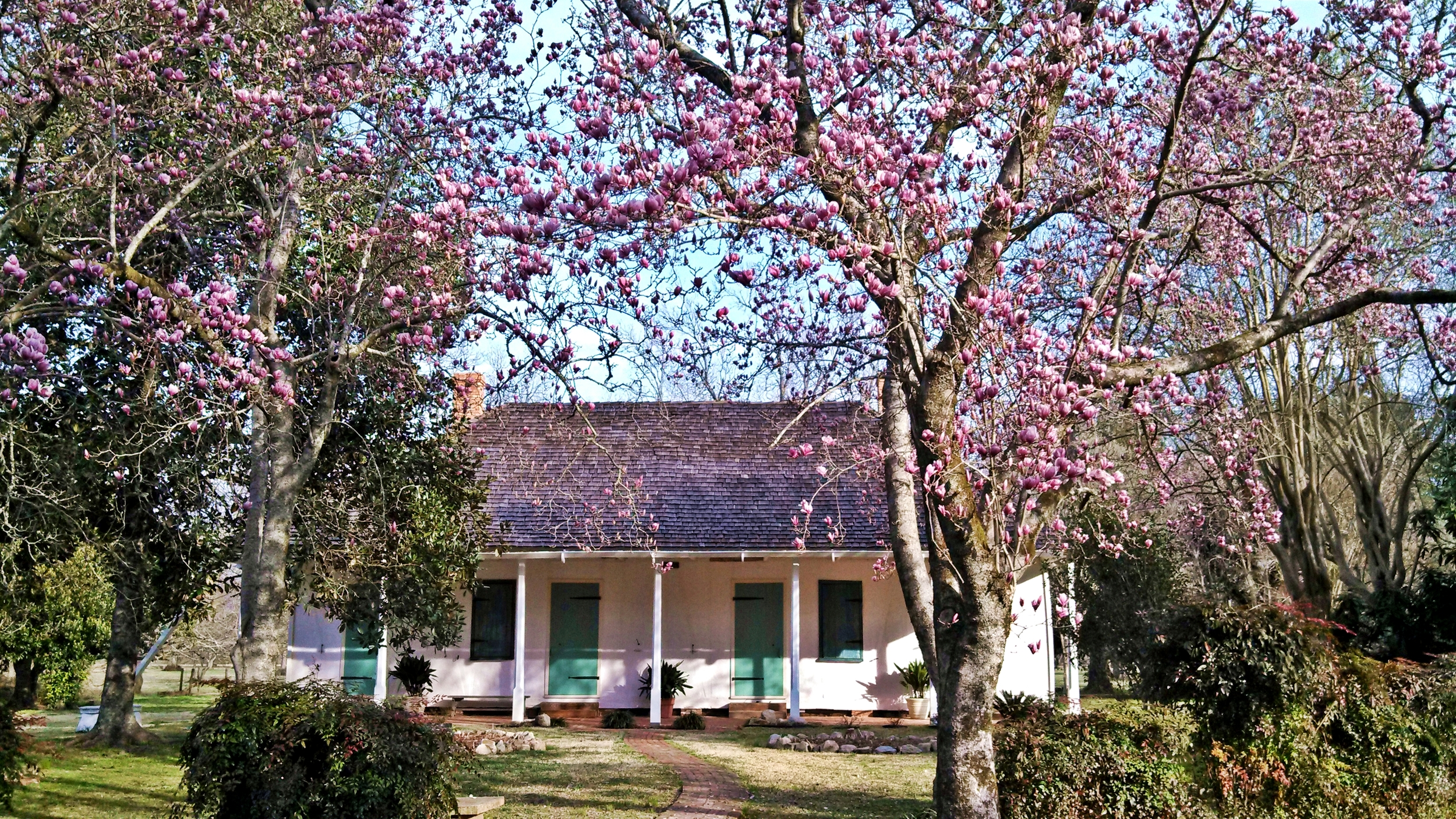 Spring Blossoms at Yucca House
