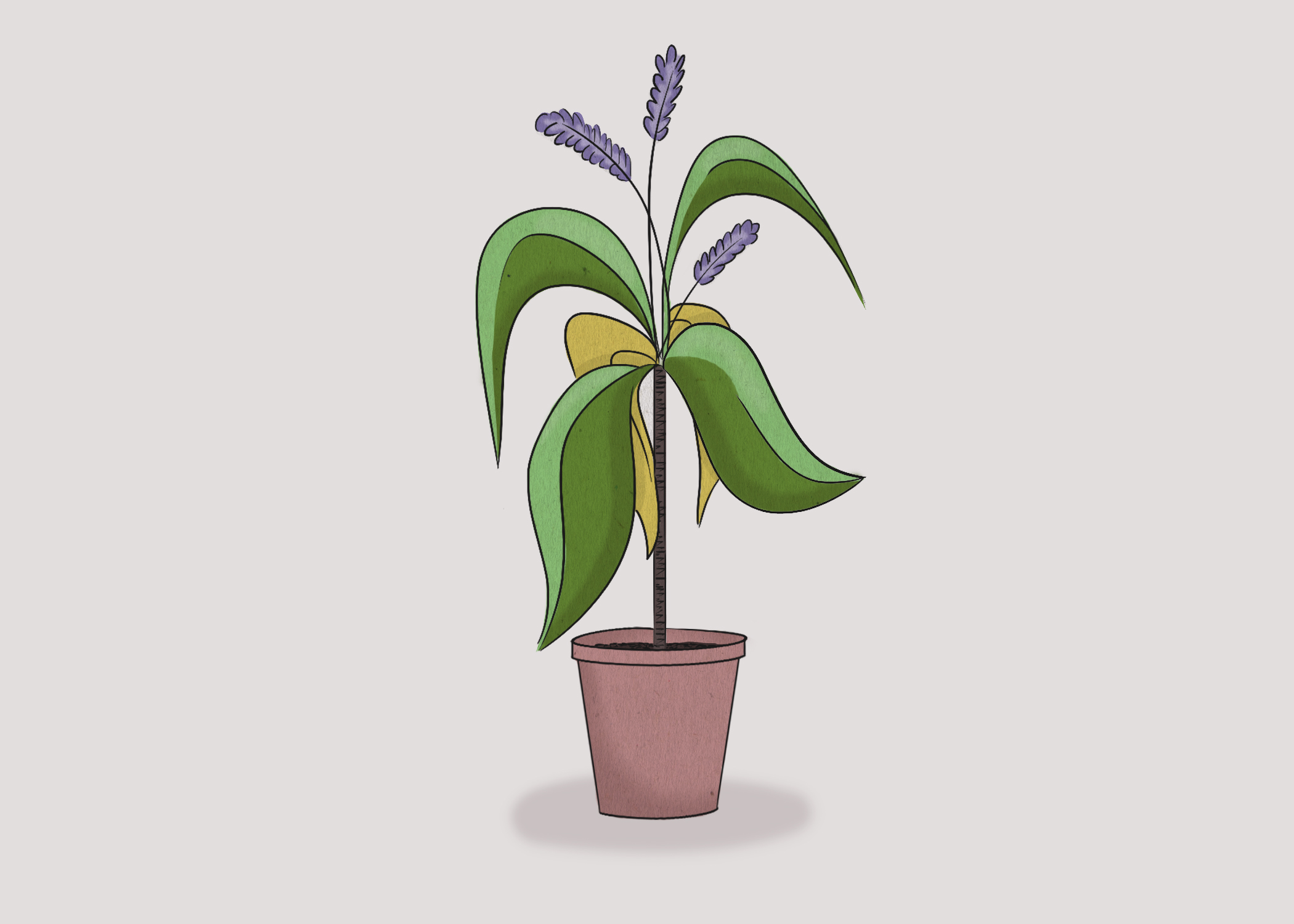corn_plant.jpg