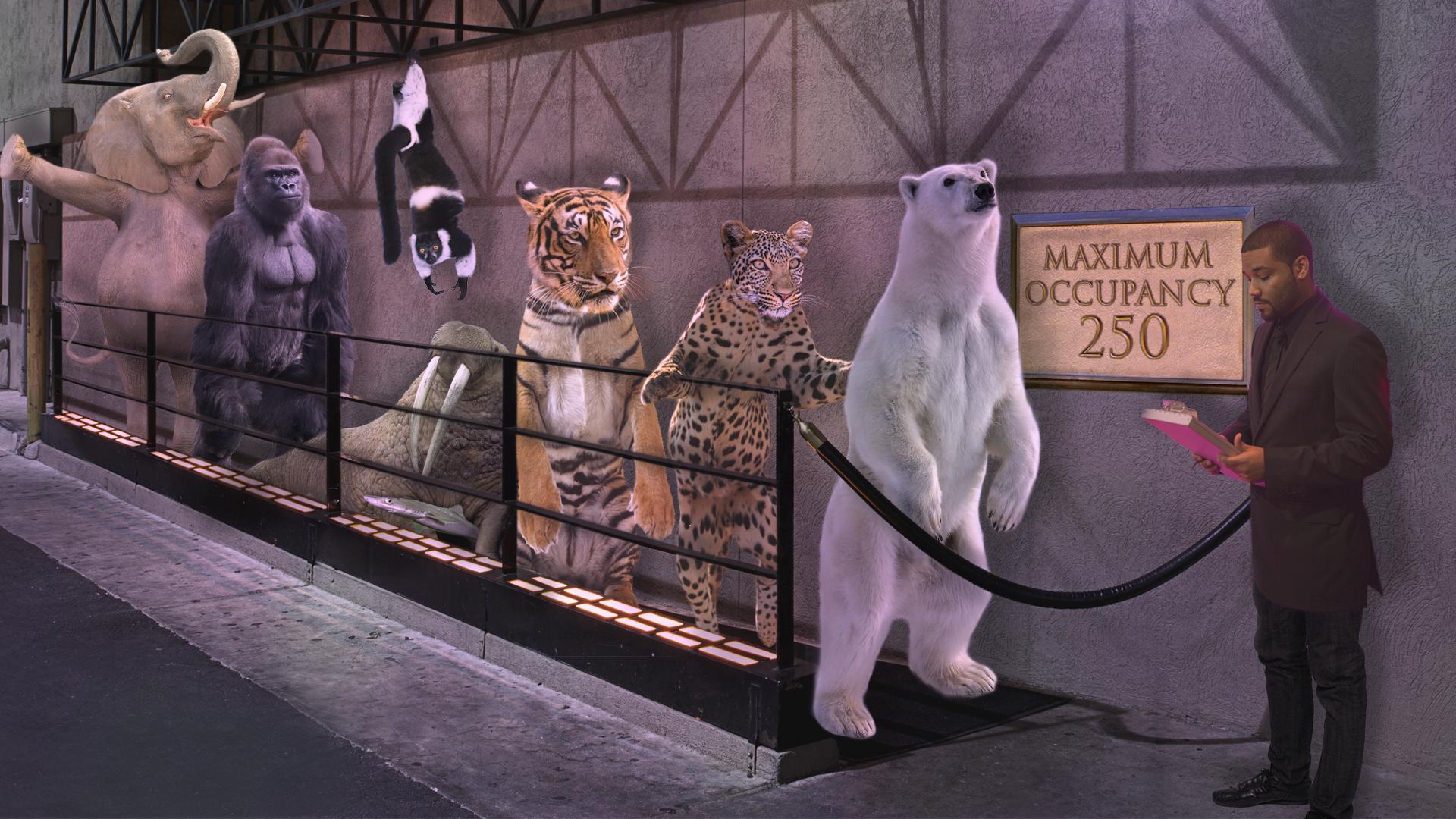 nightclub_animals.png