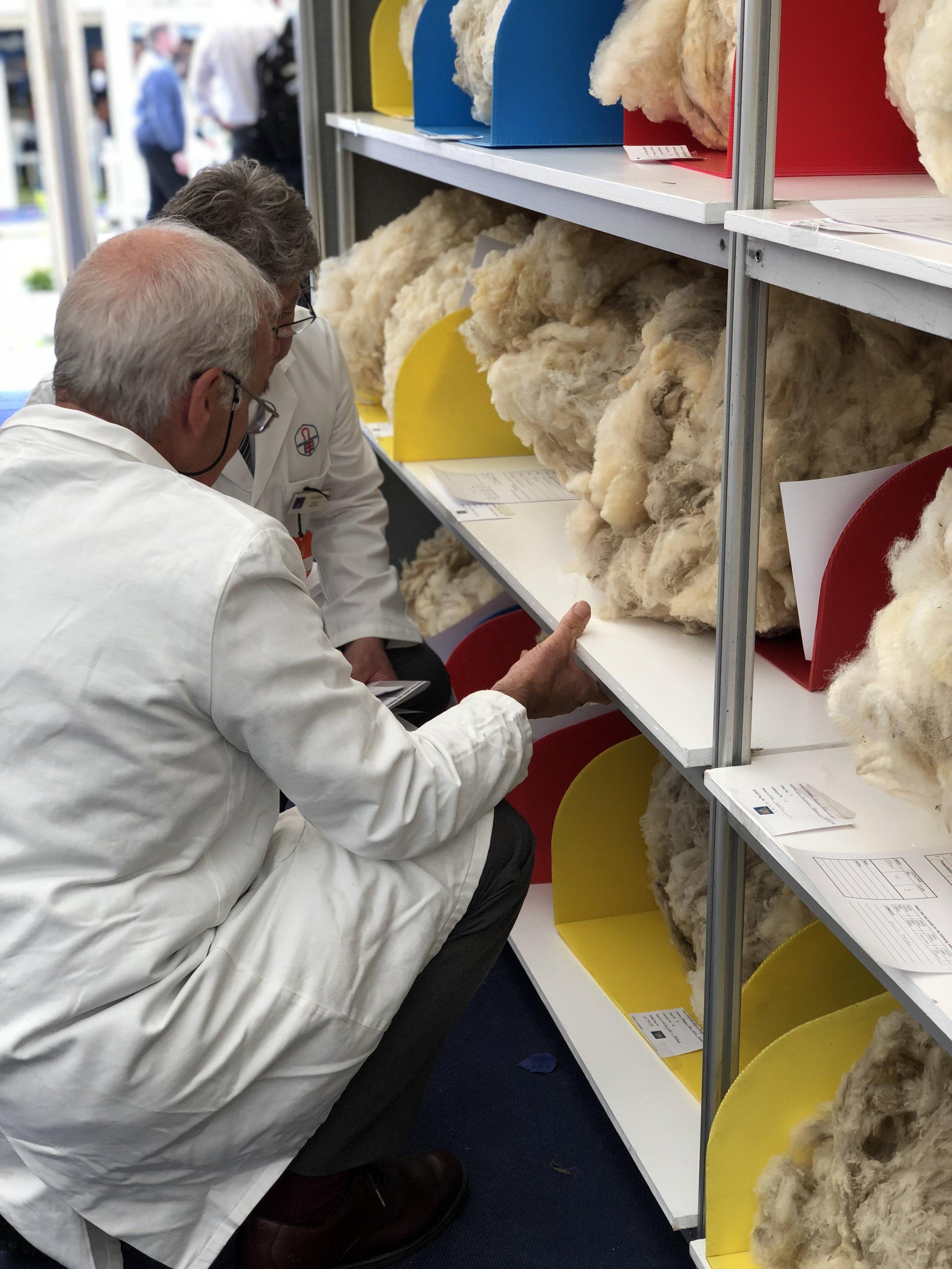 Judging the fleeces