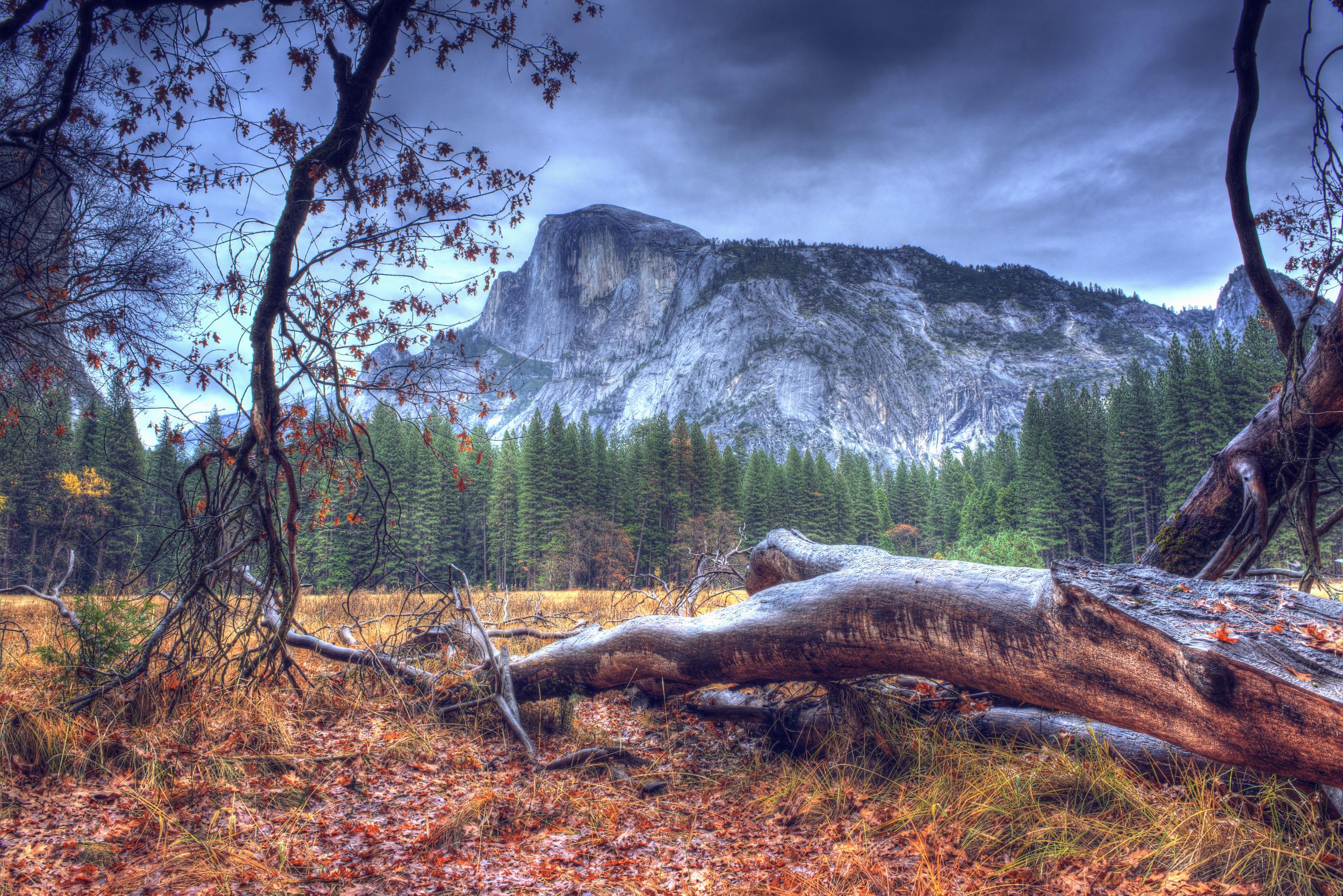Fallen Tree 2 SQ.jpg