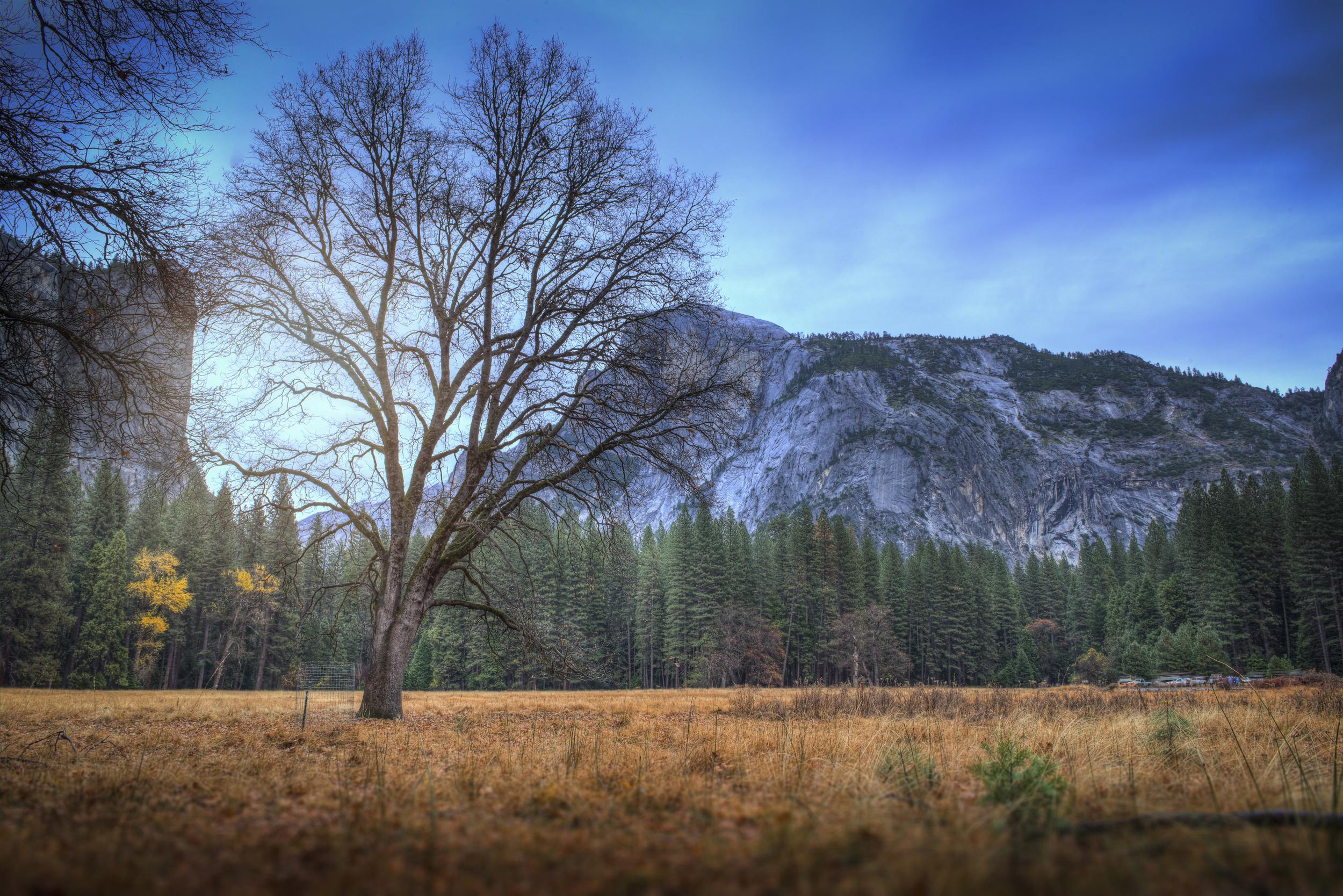 Lone Tree 2 SQ.jpg