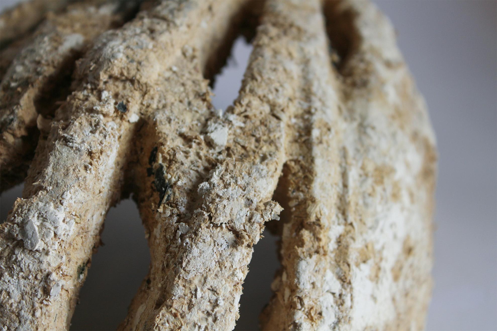 Mycelium_Image_06_01.jpg
