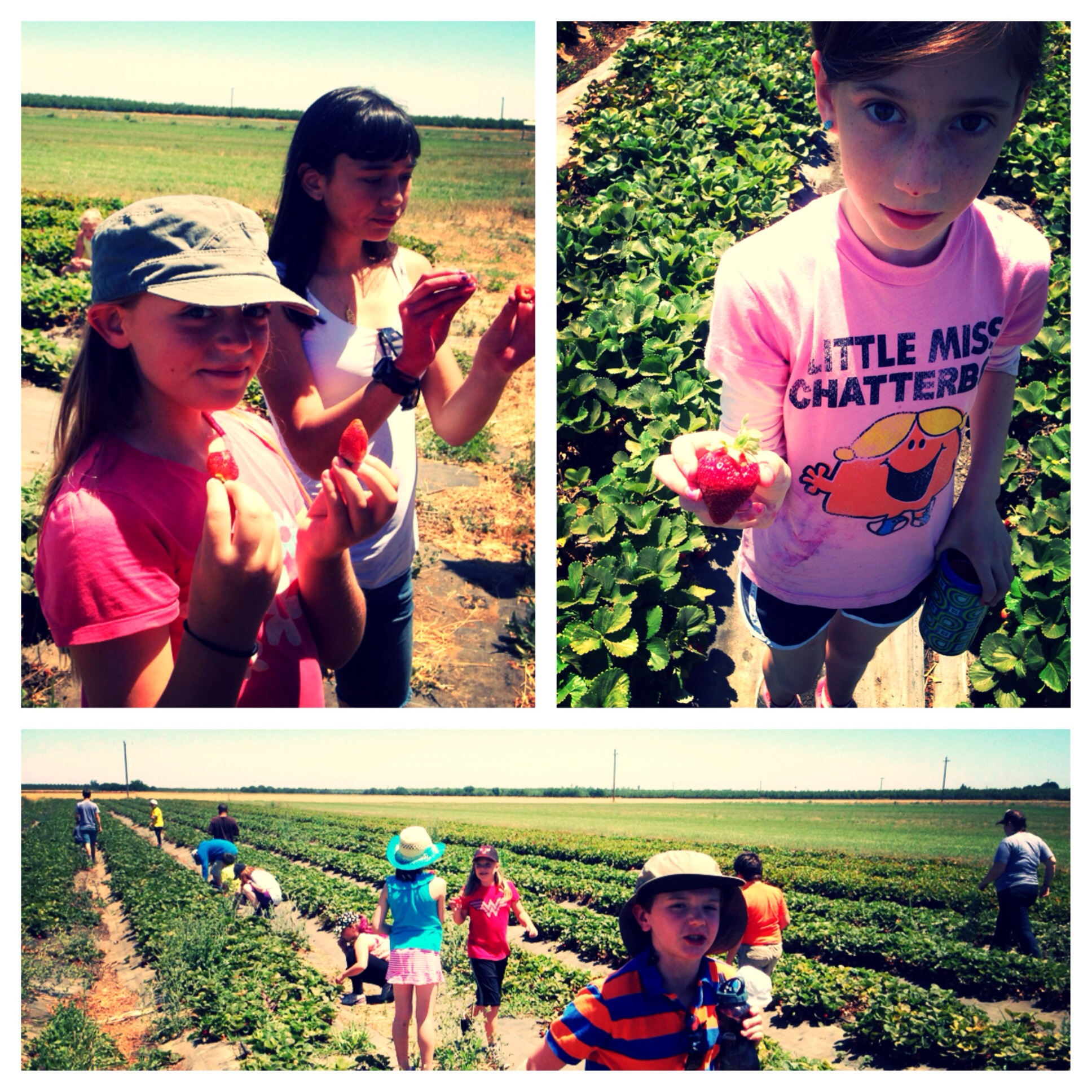 The campers found some of the freshest, juiciest strawberries I have ever seen.